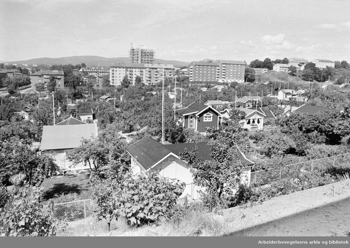 Rodeløkka Kolonihage. Utsikten fra lekeplassen. Juli 1965