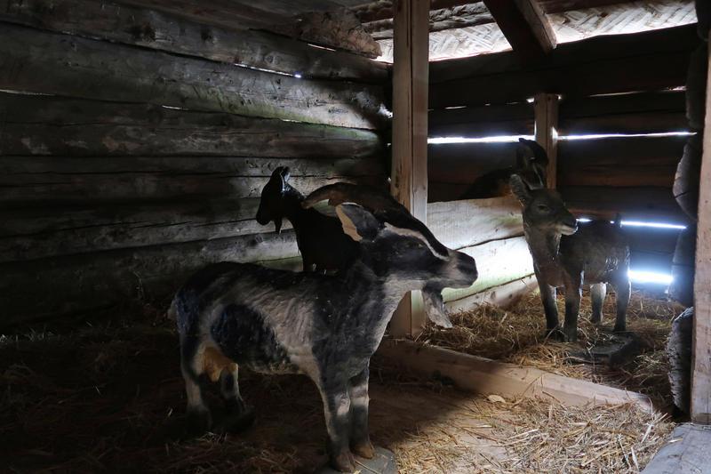 Fjøs fra Rike, Valle i Setesdal, på Norsk Folkemuseum. Foto: Astrid Santa, Norsk Folkemuseum.