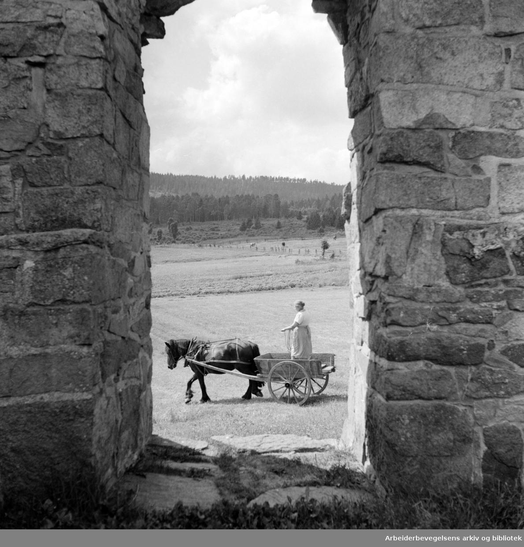 Maridalen: Ved Margaretakirkens ruiner. Juni 1958
