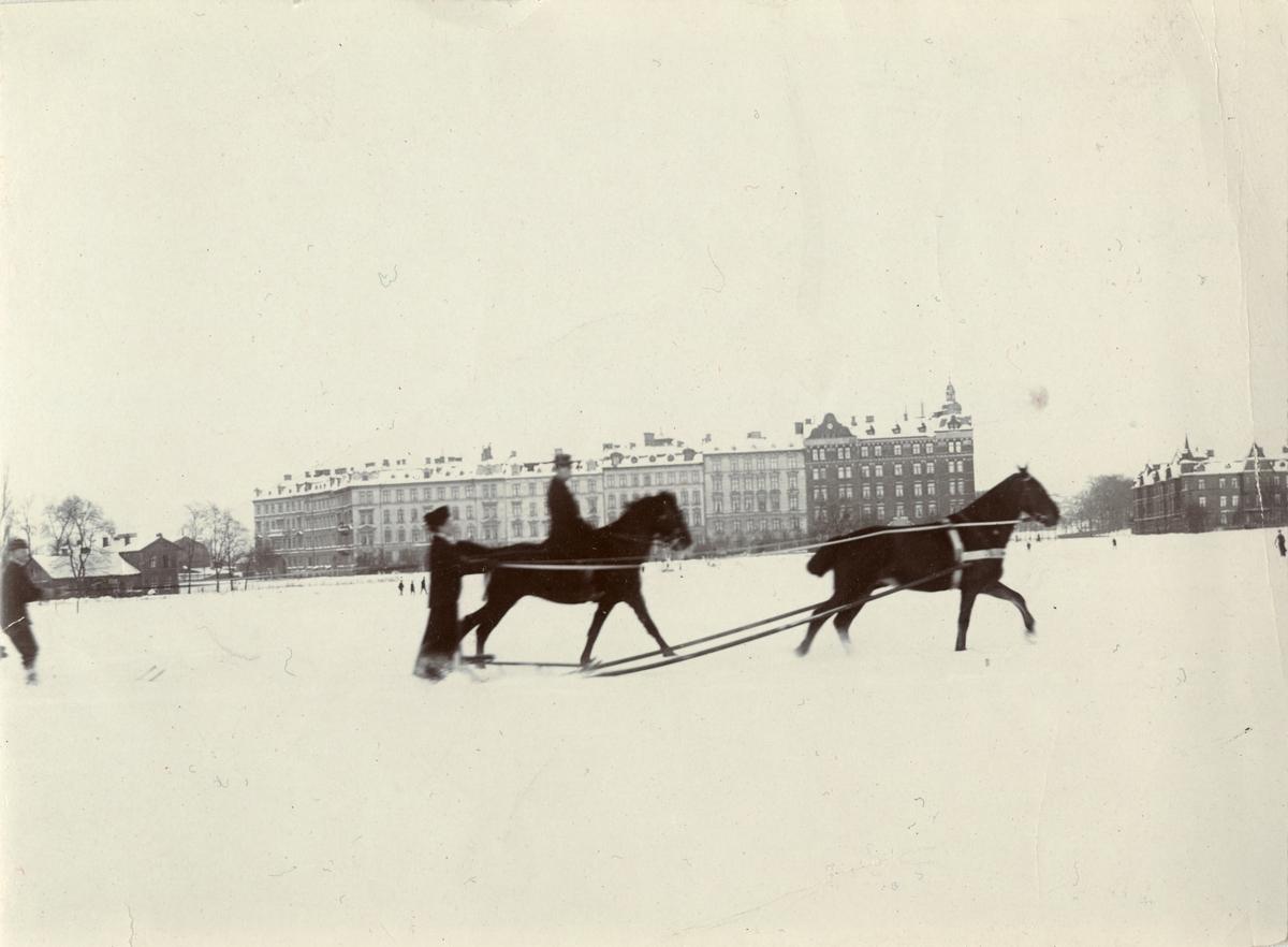 Hästtolkning i snön, Norrbotten omkring 1910.