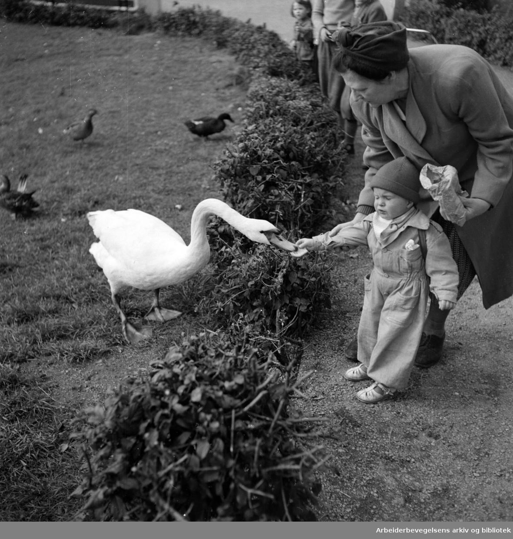 Frognerparken. 1950