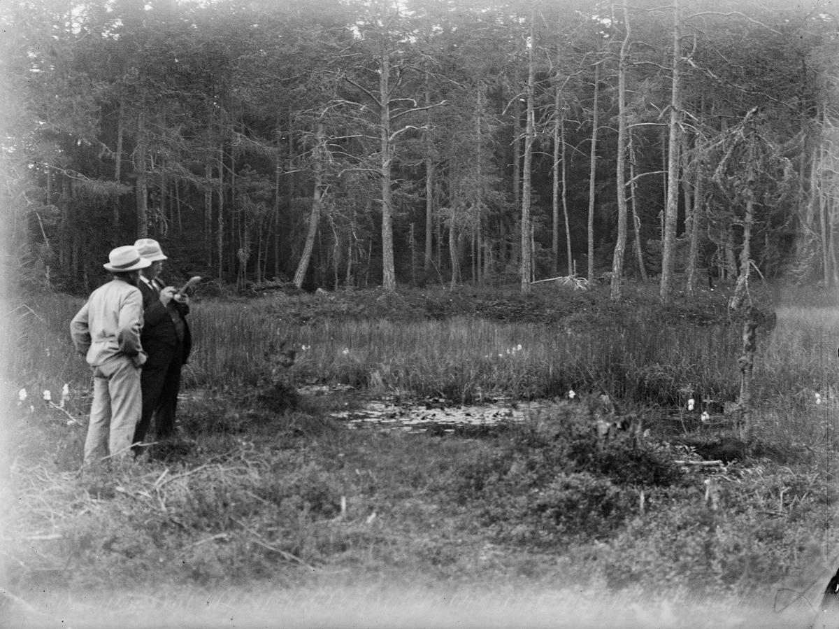Två män på myr, Uppland 1924