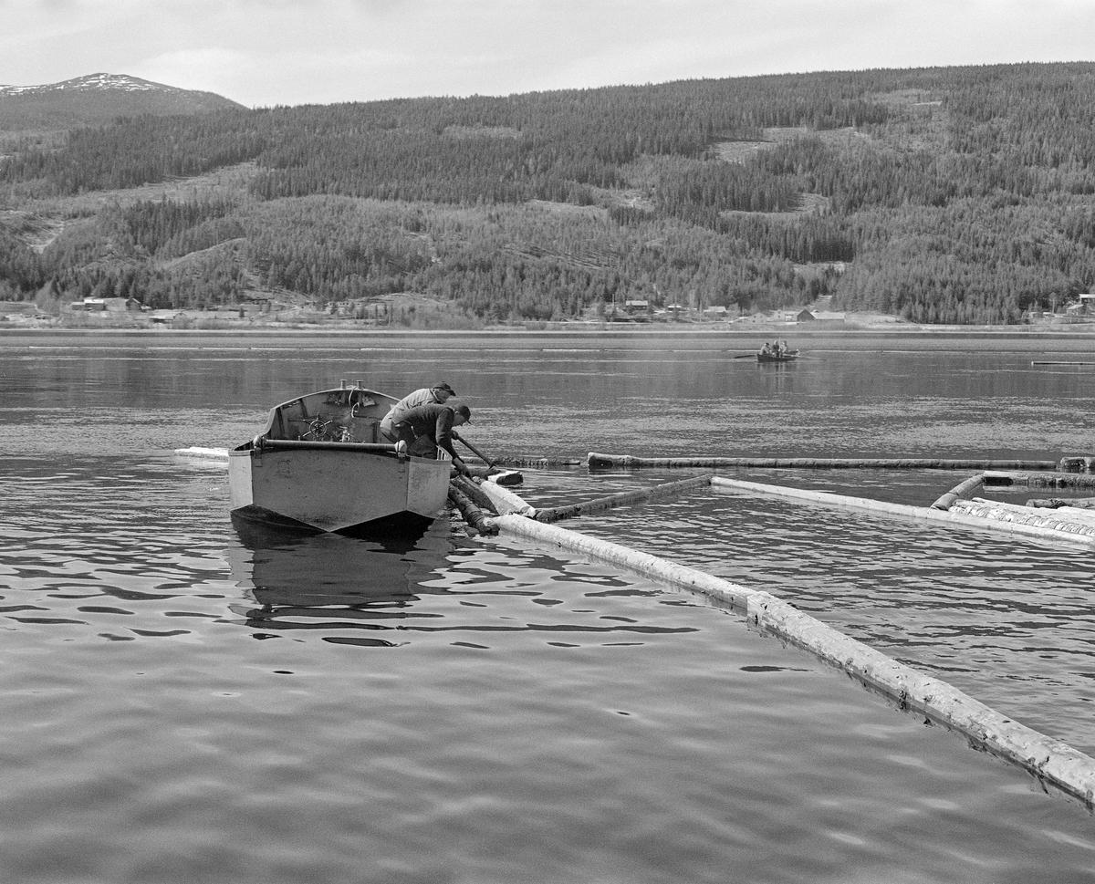 Kopling av lensestokker til ringbom ved Lomnessjøen vestre bredd i første halvdel av 1980-åra.  Arbeidet ble utført av Ola Stubsveen (1924-1998) og Harald Hansen (1926-1999) fra en av Glomma fellesfløtingsforenings varpebåter.  Disse små stålfartøyene med innvendig dieselmotor ble brukt til å slepe tømmer i ringbommer fra Hornsetlensa og andre utislagssteder langs innsjøen sørover mot Kvernnesodden, der bommene ble åpnet, slik at tømmeret kunne flyte løst gjennom den nedenforliggende Åkrestrømmen.