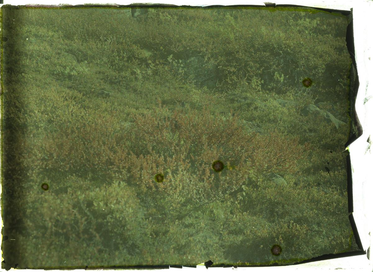 Nærbilde av Kjerringkjørr. Mørkt og slitt bilde