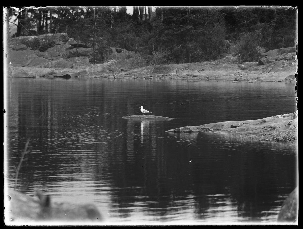 En mås fotograferad vid en sjö.
