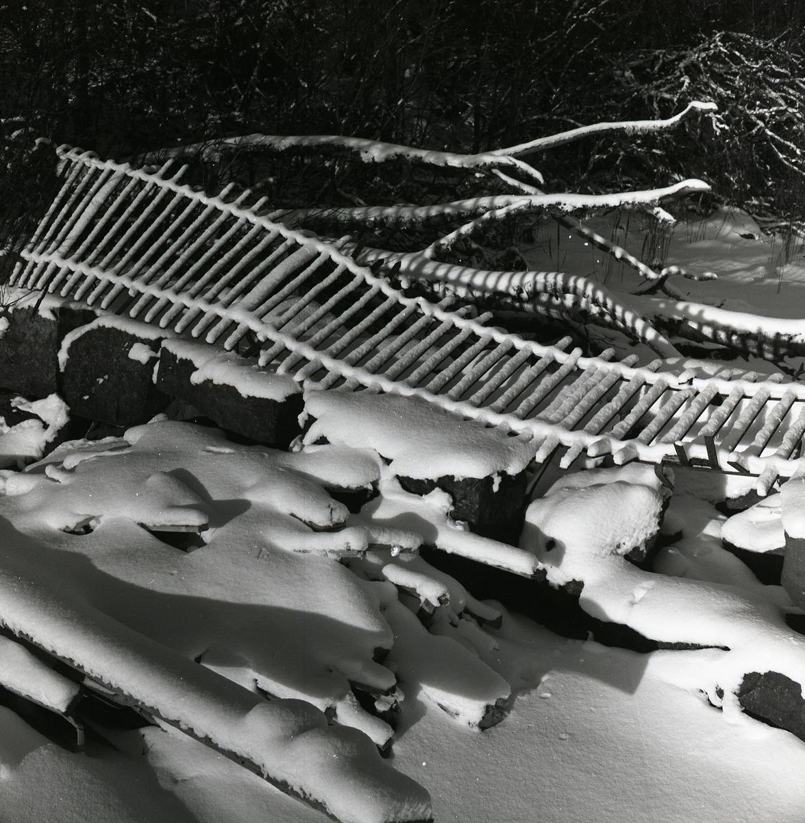 Snötäckt staket som fallit omkul i Lenninge, 31 januari 1960.