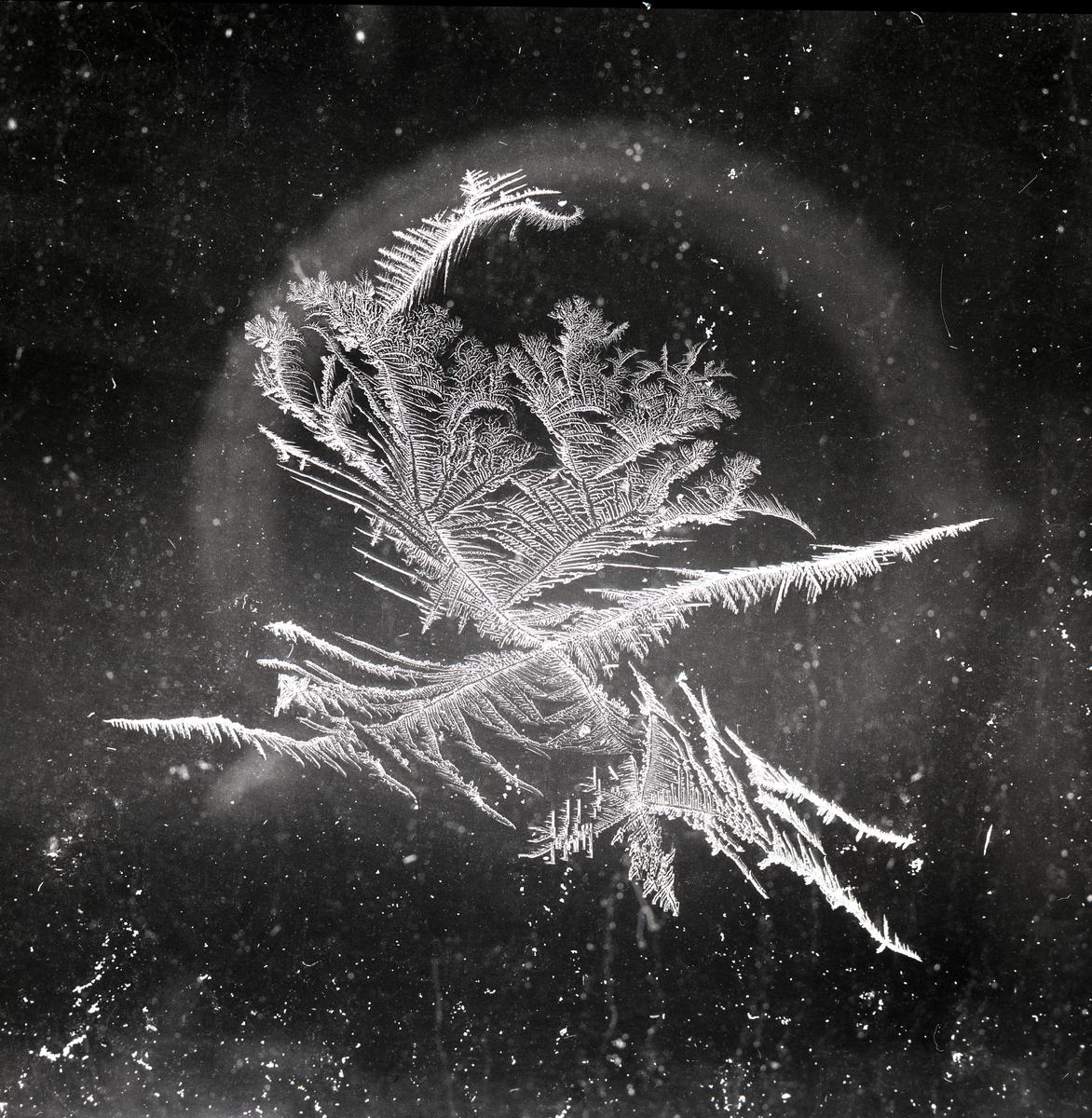 Rimfrost som bildat ett mönster , 20-21 Januari 1958.