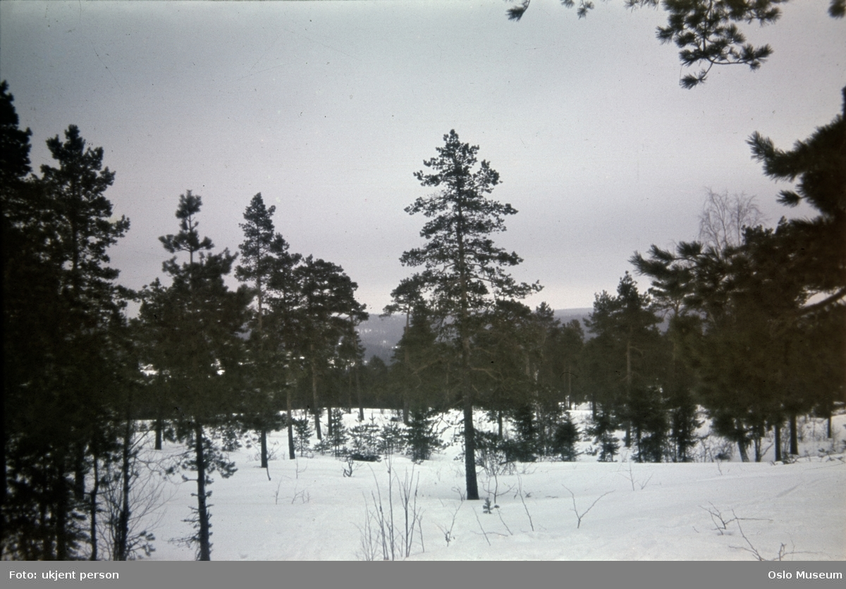 skog, snø