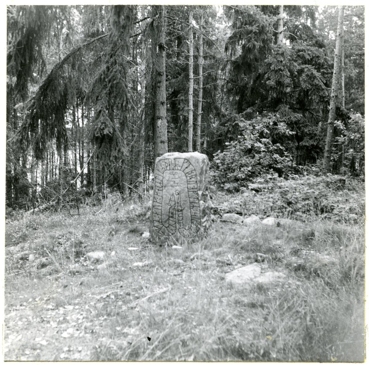 """Götlunda sn, Södra Lunger.  Lungeråsen. Runsten, """"Kung Sigges sten"""". 14/7 1953."""