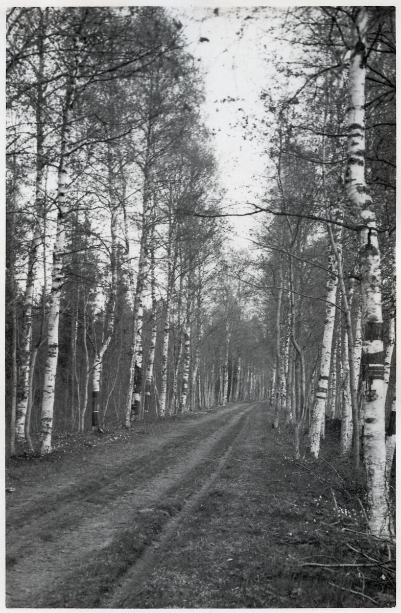 Norbergs Järnväg. Den gamla banvallen.