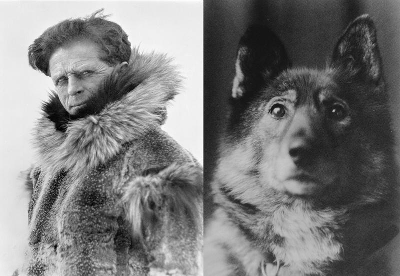 Leonhard Seppala (1877–1967) og hans hund Togo (1916–1929).. Foto/Photo