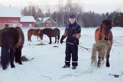 Jordbrukare Roger Kjellberg lägger ut hö till sina islandshä