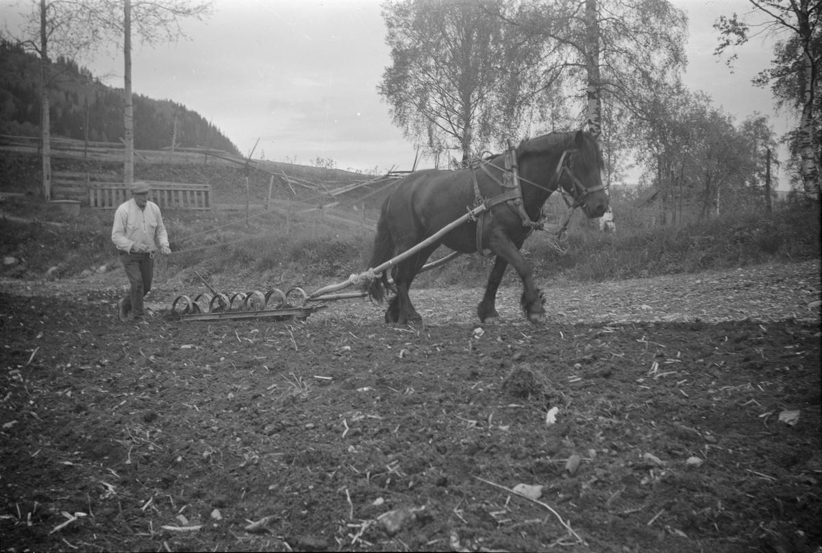 Harving av jorda, mann med hest