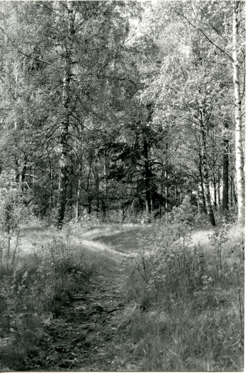 Badelunda sn, Tibble. Hålväg. 1991.
