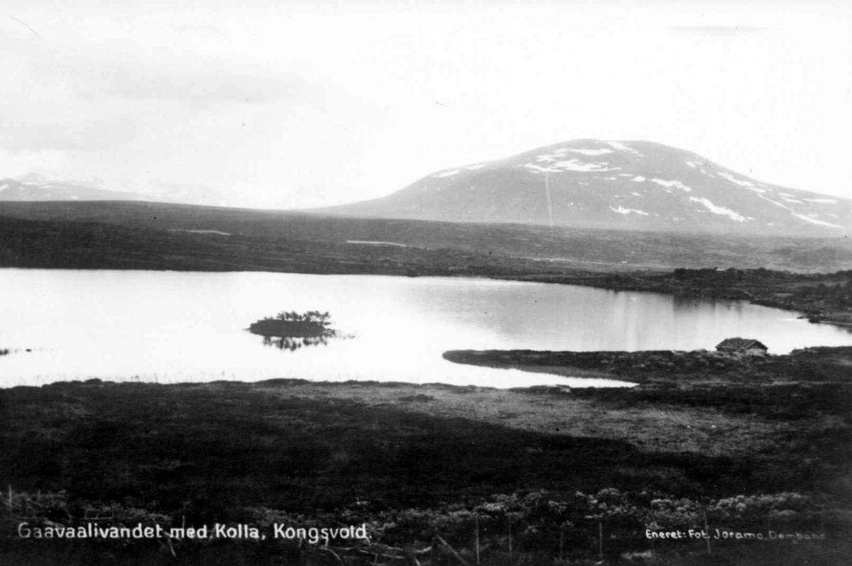 Reprofotografi fra Gåvålivannet med Kolla, Kongsvold