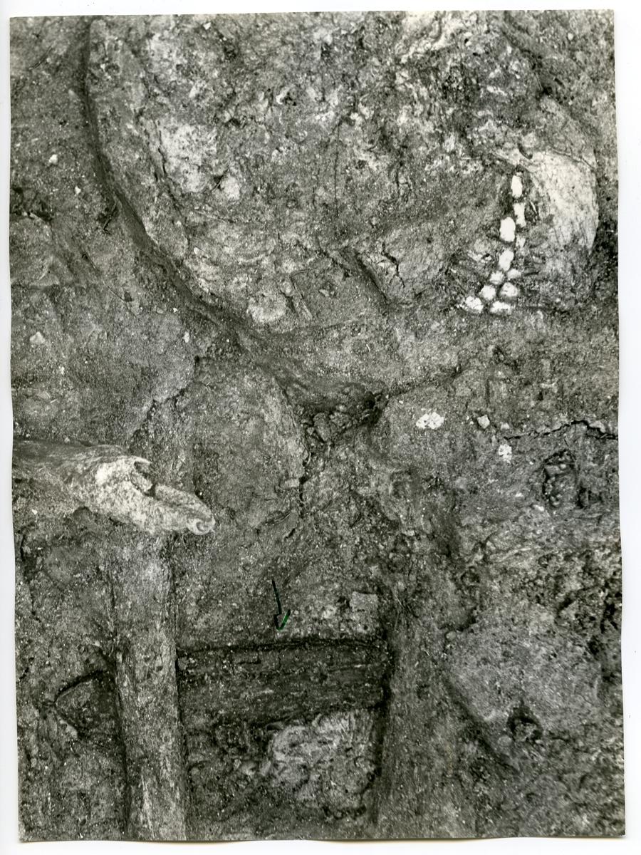 Köping sn, Norsa. Norsa RAÄ 131, grav 1. In situ nära kraniet: benkammen. 1964.