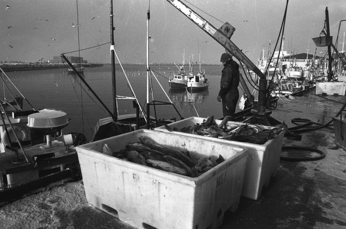 Andenes havn. Vintermotiv fra fiskebruket.
