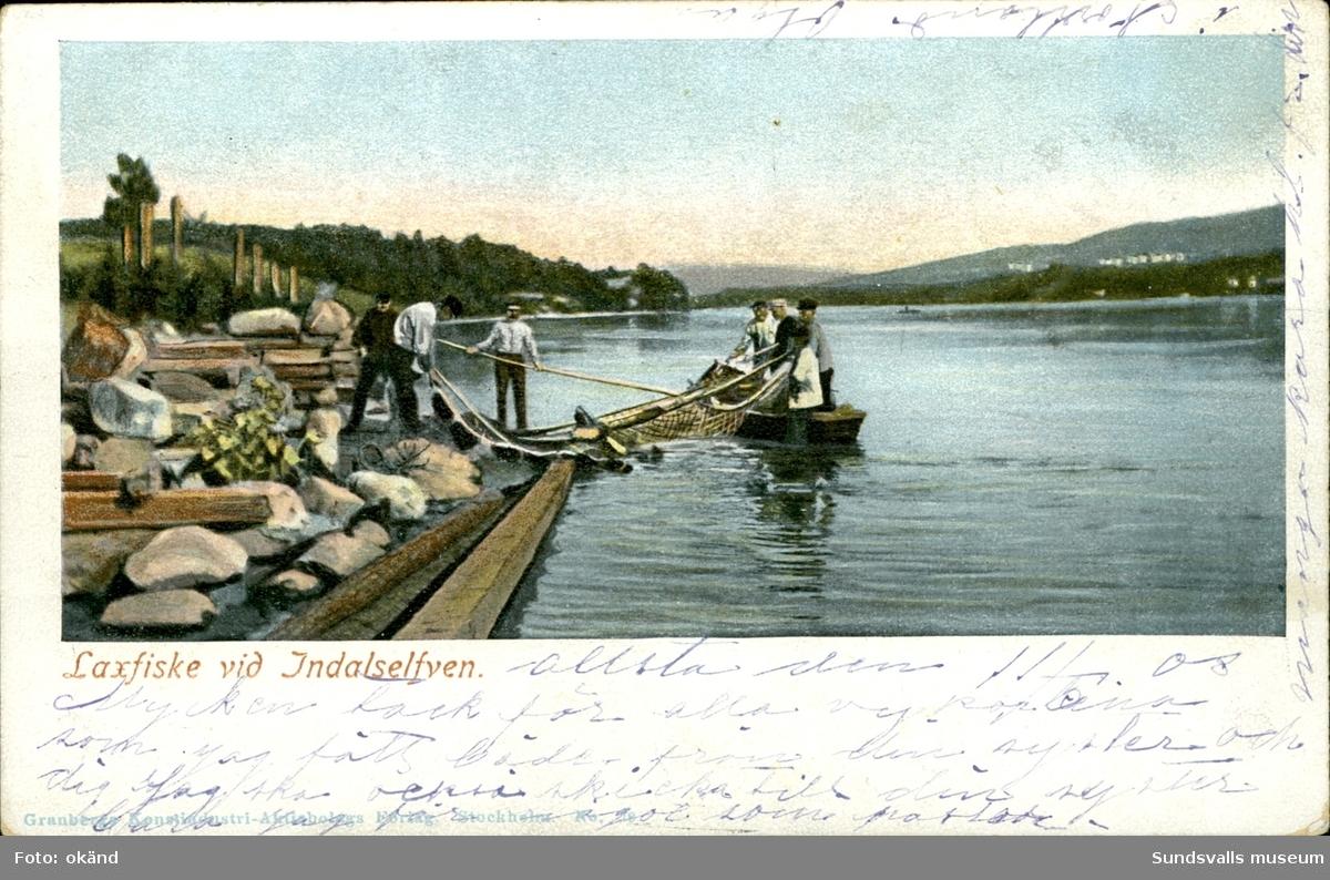 Vykort med motiv över laxfiske i Indalsälven.