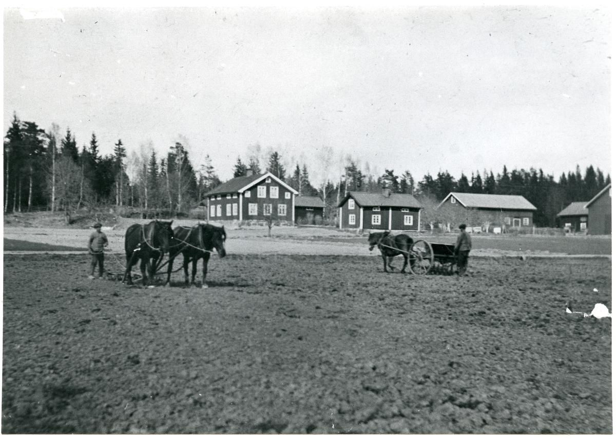 Norrby socken, Sala, Varmsätra. Anders Olsgården. Vårbruk, 1915.