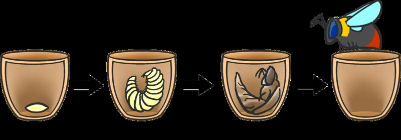 Inni reiret lager humledronningen flere vokskrukker hvor hun legger egg. Eggene klekker til larver som utvikler seg til arbeidere, alle hunner.