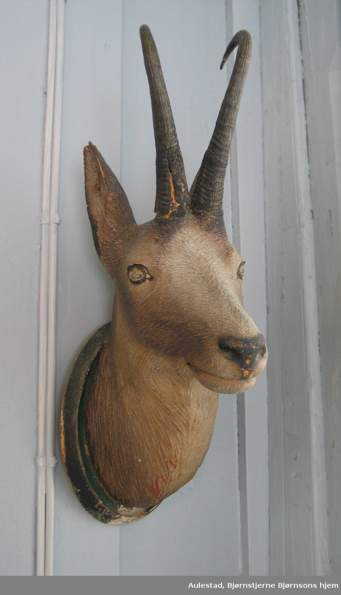 Dyrehode på oval treplate. Rådyr eller hjort.