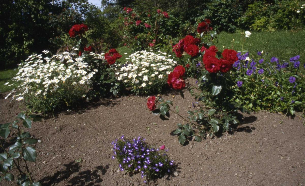 DOK:1990, hage, blomsterbed, hageplanter, sommer,