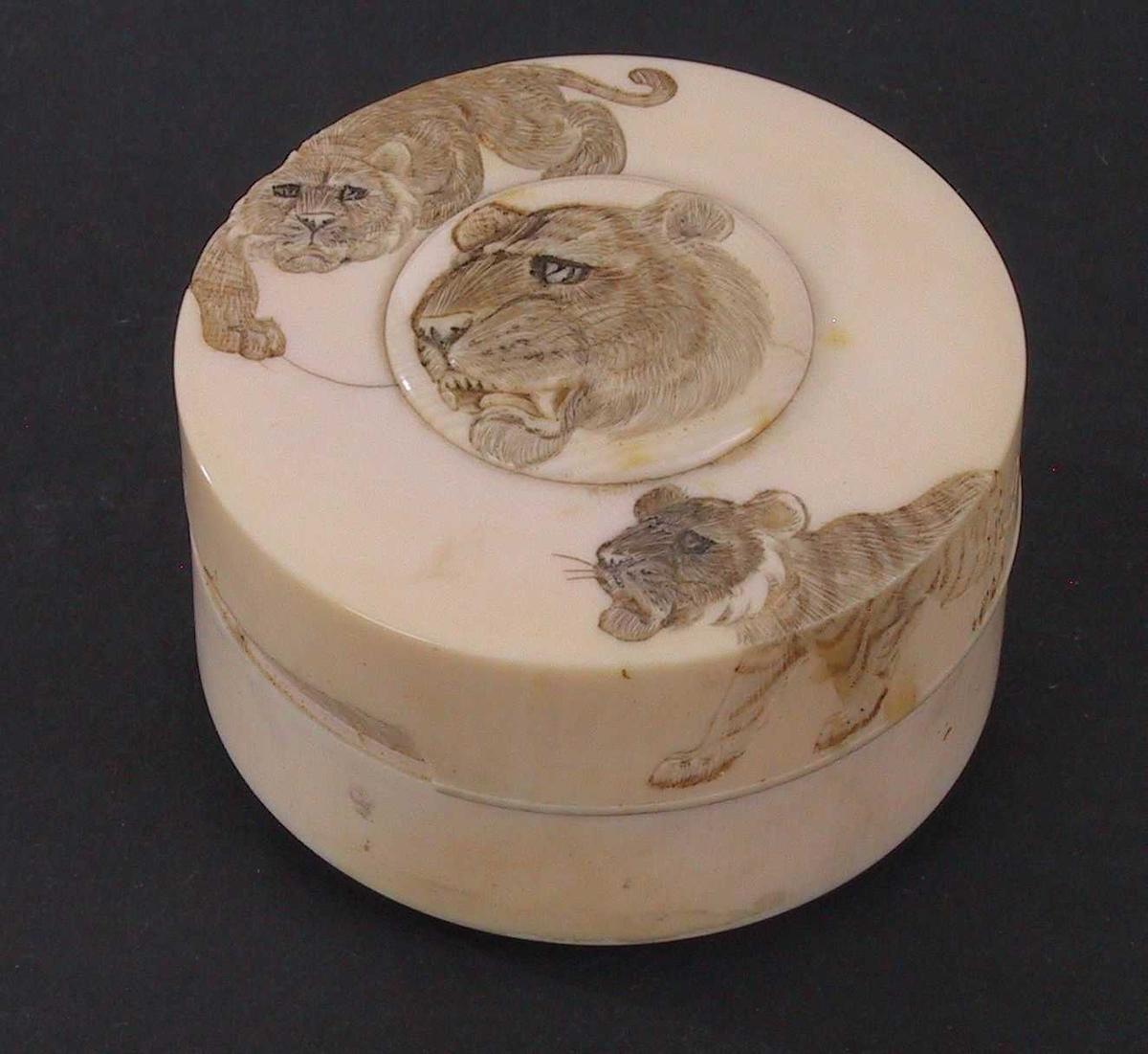 Tigerdekor./ tigerhode pm, og en tiger på hver side over kanten.