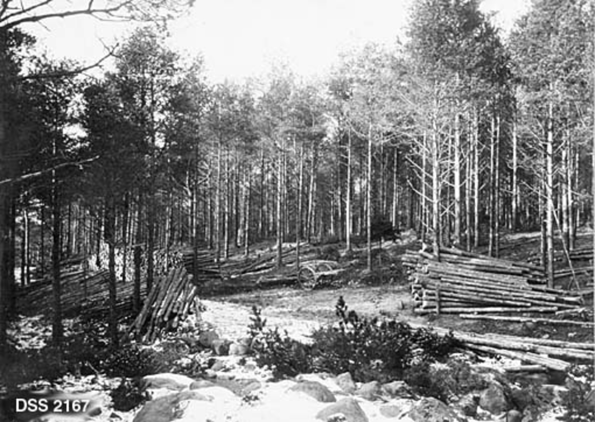 Tømmervelter ved Selshammervegen på Myklebust i Høylandkomplekset statsskog.  Bildet er tatt i et nytynnet furubestand.  Tynningsvirke er opplagt i velter på begge sider av vegen.  Ei tohjulet kjerre, som antakelig har vært brukt til tømmertransport med hest i dette snøfattige området, står om lag midt i bildet.  I forgrunnen ei steinrøys med litt snø.  Høylandkomplekset ble kjøpt av staten, stykke for stykke, fra 1873 og framover. Målet var å etablere et skogreisingsprosjekt i en region som ellers var skogfattig.  Forstmester Hans Andreas Tanberg Gløersen (1836-1904) var pådriver for dette prosjektet.