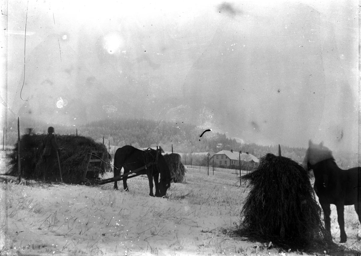 Hest og slede, innkjøring av lo, skuronn, Grefsheim gård, Nes, Hedmark. Tidlig vinter.