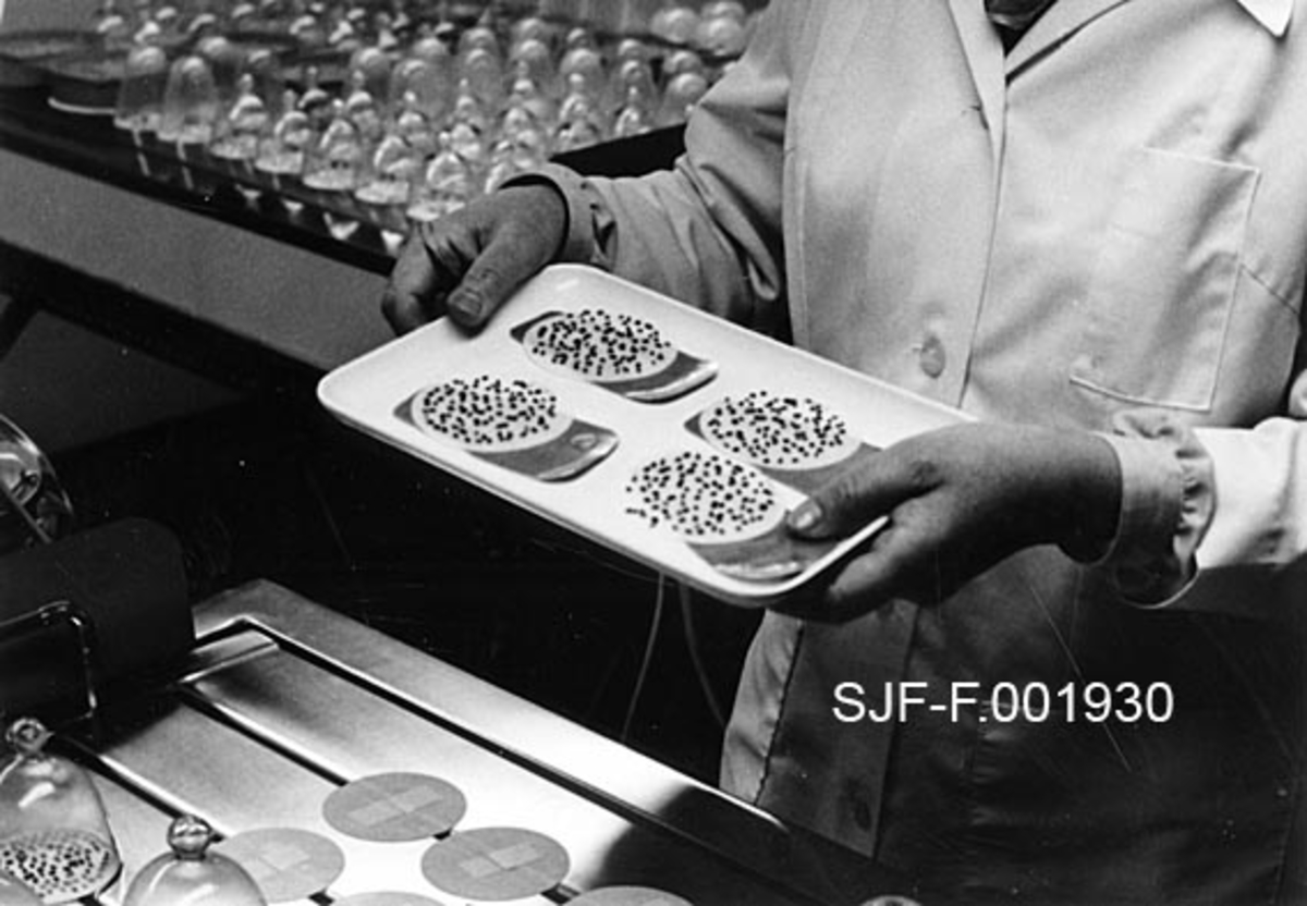 """En laborant i kvit frakk bærer fire oblater med fra spirebordet ved Skogfrøverket vekk for telling av hvor stor andel av de utlagte frøene som har spirt.  Foran (under brettet) ser vi et hjørne av et spirebord, hvor det ligger tomme oblater """"med veker"""" og i bakgrunnen (over brettet) skimtes et annet spirebord hvor spireprosessen pågår under gjennomsiktige glass- eller plastklokker.  Spirebordene har ei overflate av rustfritt stål med spalter.  Disse platene lå over vannbeholdere.  Laboranten bruker oblater av porøst papir.  På undersida av oblatene er det """"veker"""" som stikkes ned i spaltene, slik at de kan suge opp fuktighet fra det underliggende vannbadet.  På hver oblat ble det lagt et bestemt antall frø.  Frøene ble skjermet under glass- eller plastklokker.  Temperatur og lysforhold skulle variere slik at spireprøvene fikk en slags døgnsyklus, ideelt sett med 30 grader om dagen og 20 grader om natta.  Temperaturvekslinga oppnådde en ved å variere temperaturen i vannbadet.  Spireresultatene ble testet etter 7 og 21 dager, for enkelte frøslags vedkommende også etter 42 dager.  Etter opptelling av spirte frø, kunne laboranten angi en spireprosent for den frøbeholdningen prøvene var hentet fra.  Informasjon om spireprosent skulle følge et frøsertifikat, en slags varedeklarasjon, som Skogfrøverket sendte med salgsfrøet til kjøperne, som i hovedsak var skogplanteskoler"""