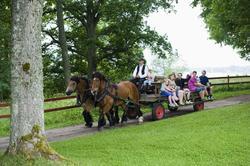 Jordbrukets dag på Julita gård. Rundtur med häst och vagn i