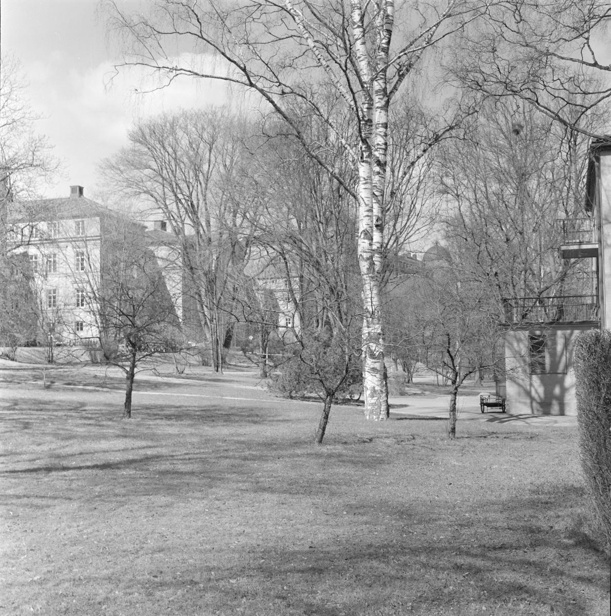 Park utanför Akademiska sjukhuset, avdelning B 29-36, Uppsala 1958