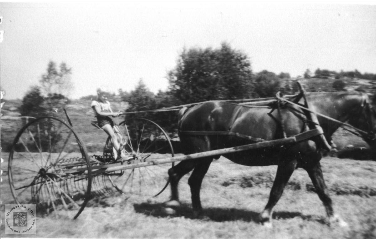 Smågutten på hesteriva. Theodor Tjomsland, Laudal.