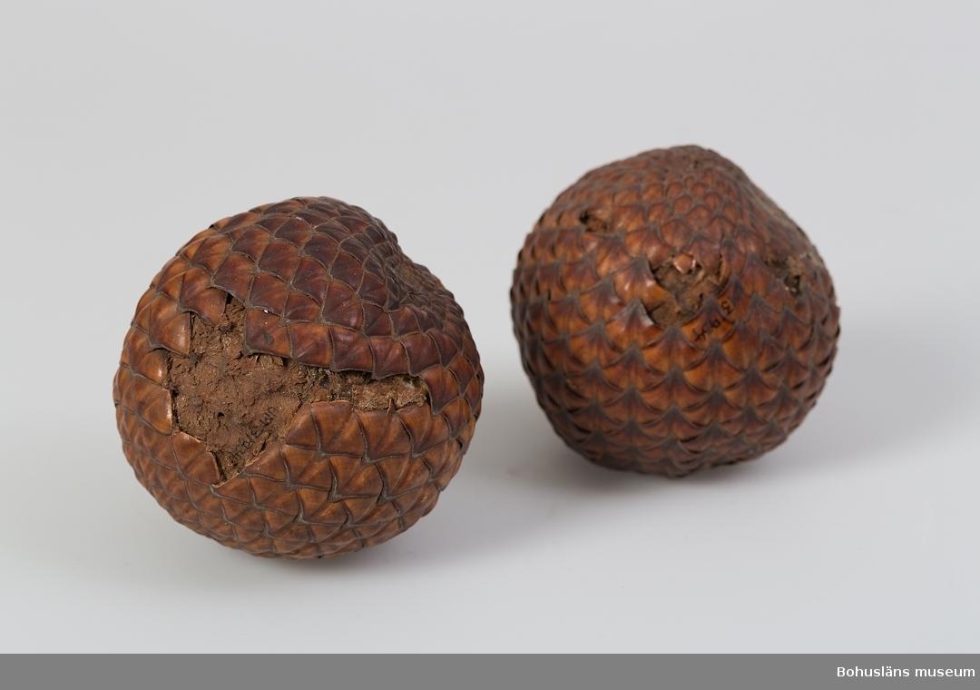 """""""Frukt från Afrika i en Orangelund vid Coléah ½ svensk mil från Medelhavskusten. Sk. 1865 av Löjtnant O. E. Hultman i Uddevalla."""" Detta är texten på etikett fastlimmad på fyrkantig papplåda med blått vaxat papper som underlag. Lådor av denna typ användes på Uddevalla museum som både förvarings- och exponeringsattribut (10,3 x 10,3 x 2,0 cm)."""