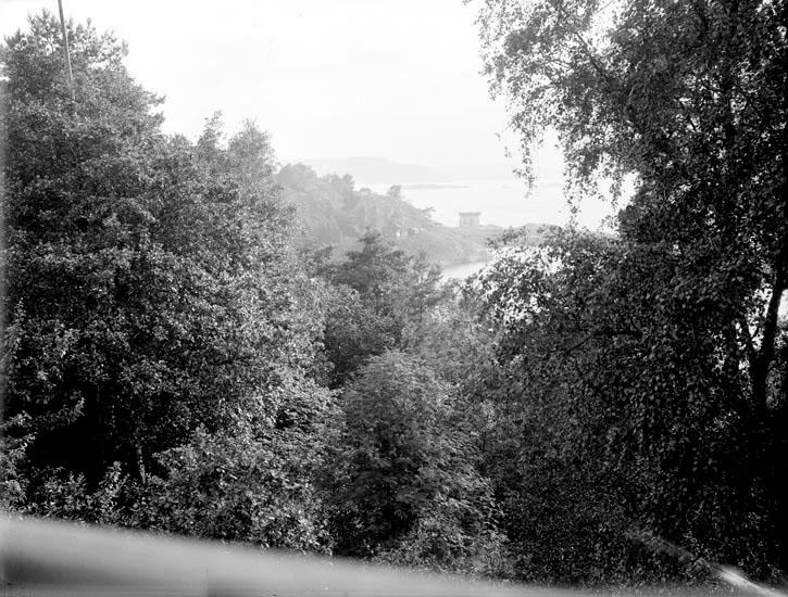 """Stjernstams, Åh, 1937."""