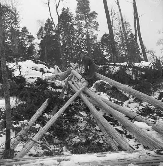 "Enligt notering: ""Skogshuggare Ivarsbo Feb 1951""."
