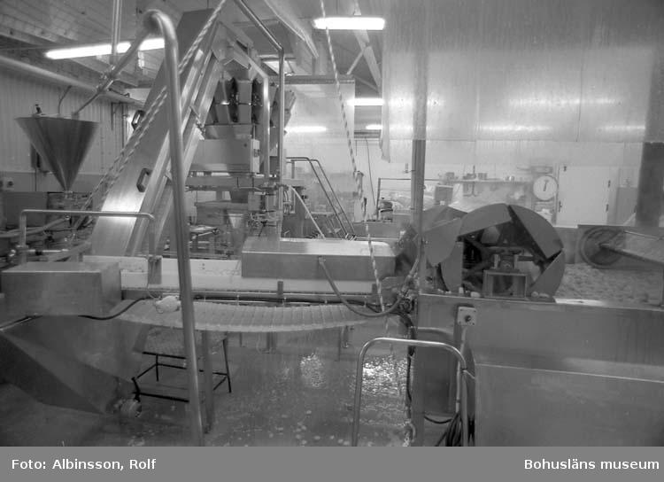"""Enligt fotografens noteringar: """"Slutet av fiskbullemaskinen, de är """"förvällda"""" och åker upp på ett transportband till vågarna."""" Fototid: 1995 den 16, 24 november och 11 december."""