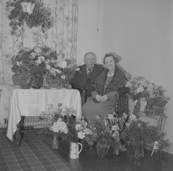 "Text till bilden: ""Fru Blomdal. Ålderdomshemmet. 1955.04.18""         ::"