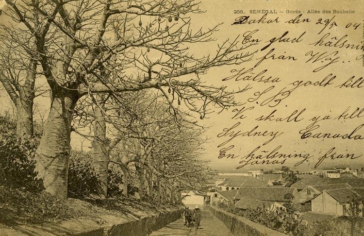 Notering på kortet: Senegal. Gorée Alleé des Baobabs.