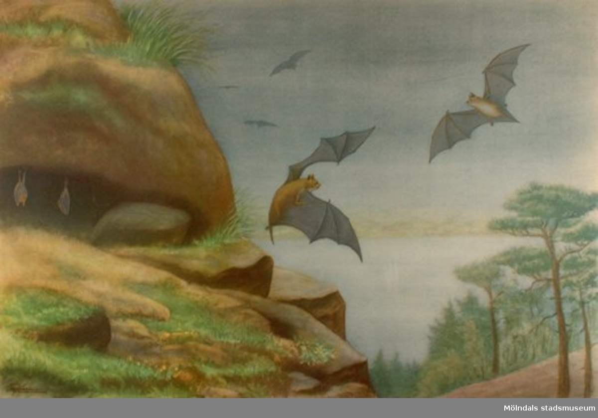:1: Fladdermus.:2: Kålfjäril.