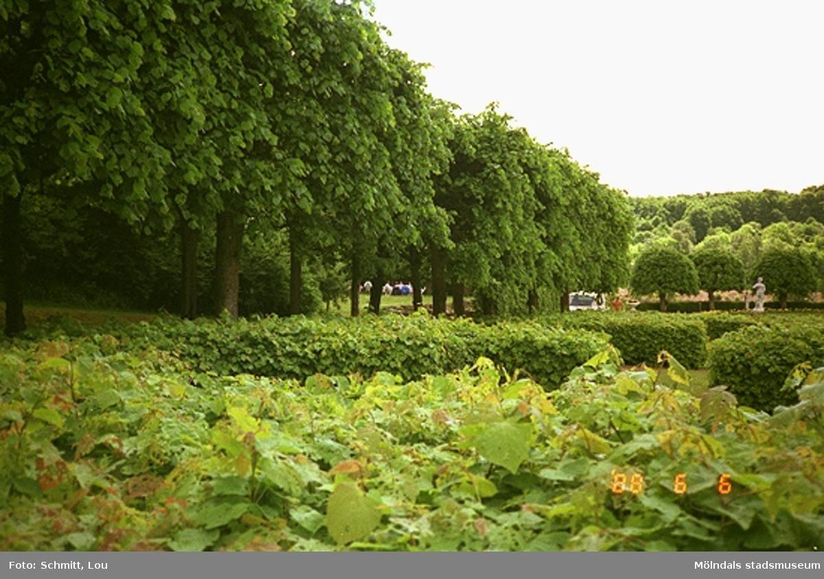 Några häckar och träd i Gunnebo slotts park.