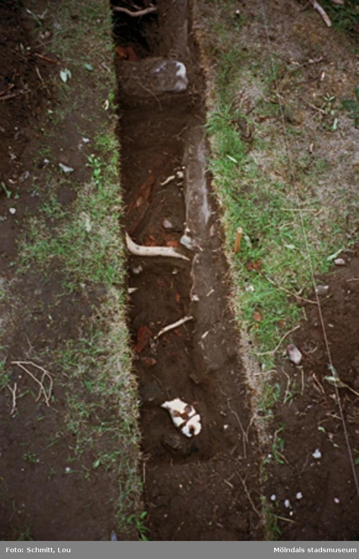 """Drivhus """"B"""", arkeologisk utgrävning vid Gunnebo slott, september 1995."""