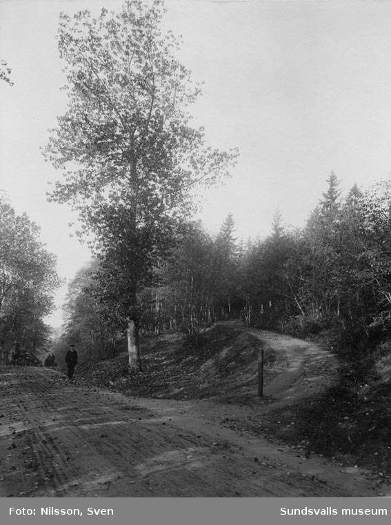 Parti av Hagavägen (nya landsvägen), från öster