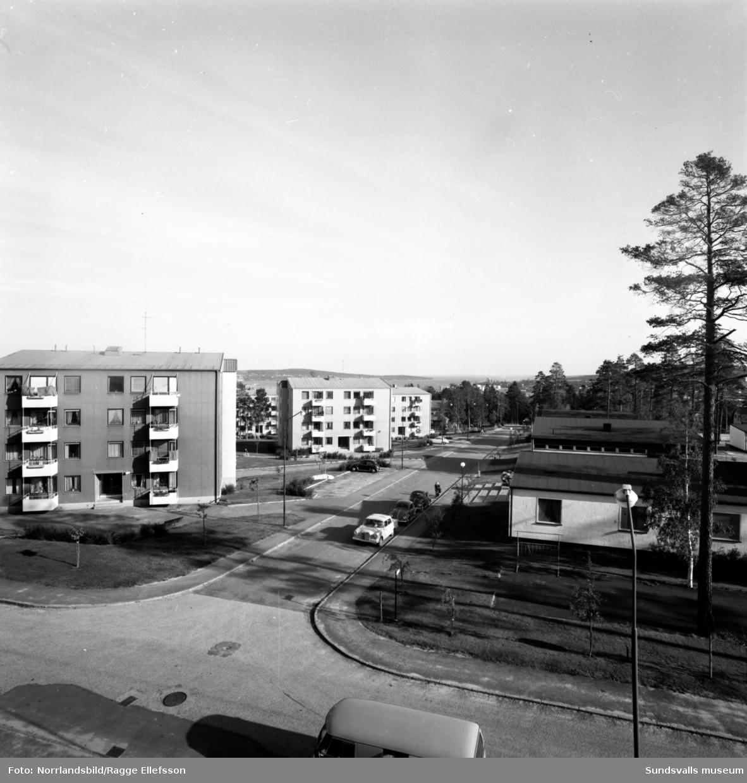 Bostadsområdet Stammen på Tomtegränd i Haga.