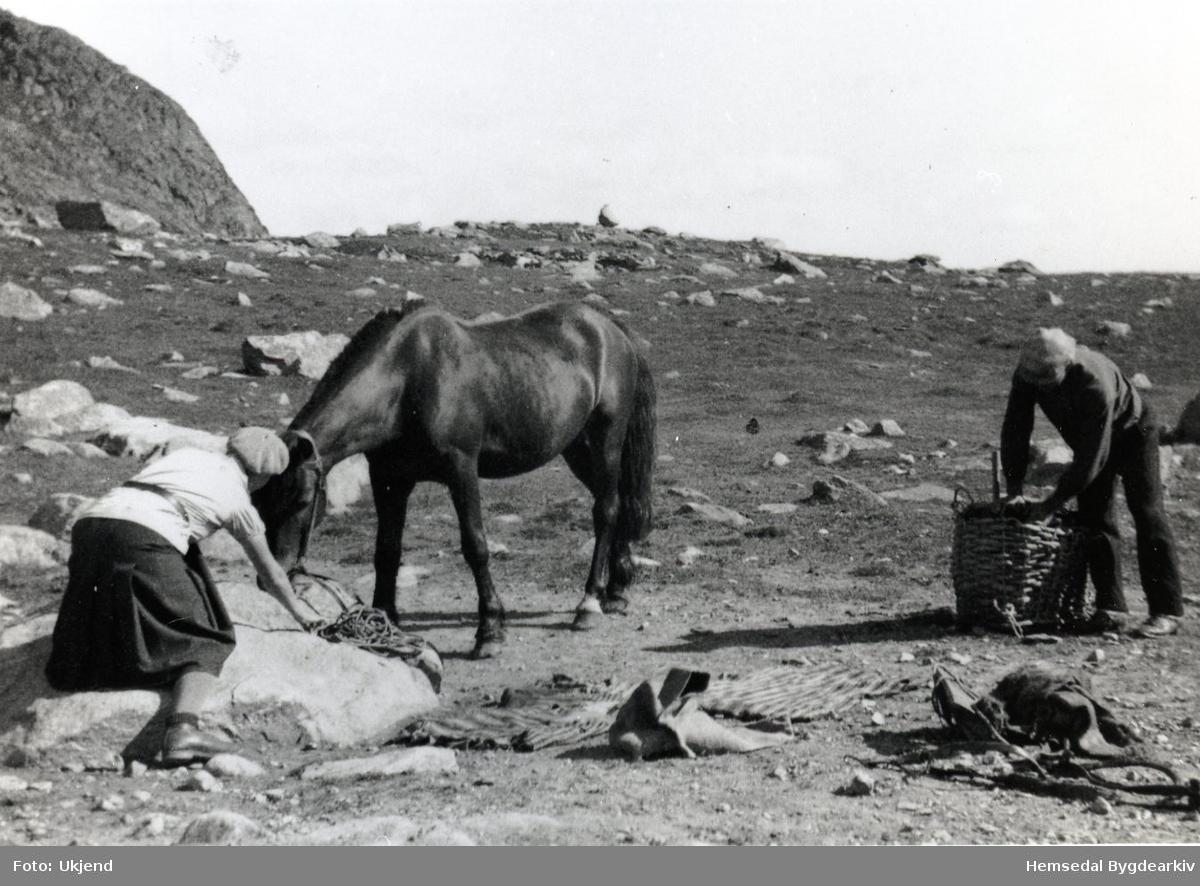Ola Snerte pakkar kløvteine på stølen Feten ein gong på 1930-talet.