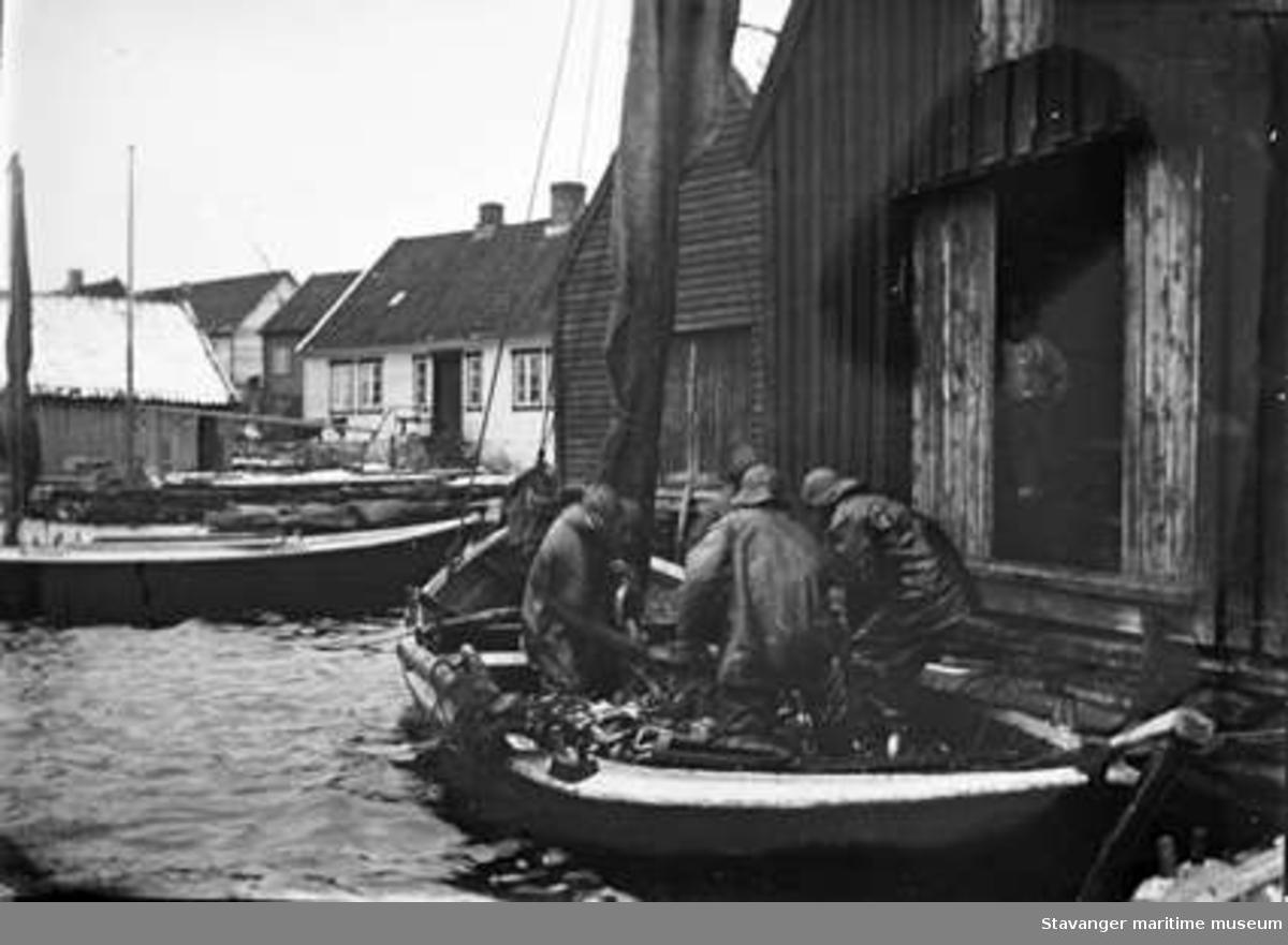 Båt med sildelast losses inn i Lars Ydstebøs sjøhus på Ydstebø, Kvitsøy.