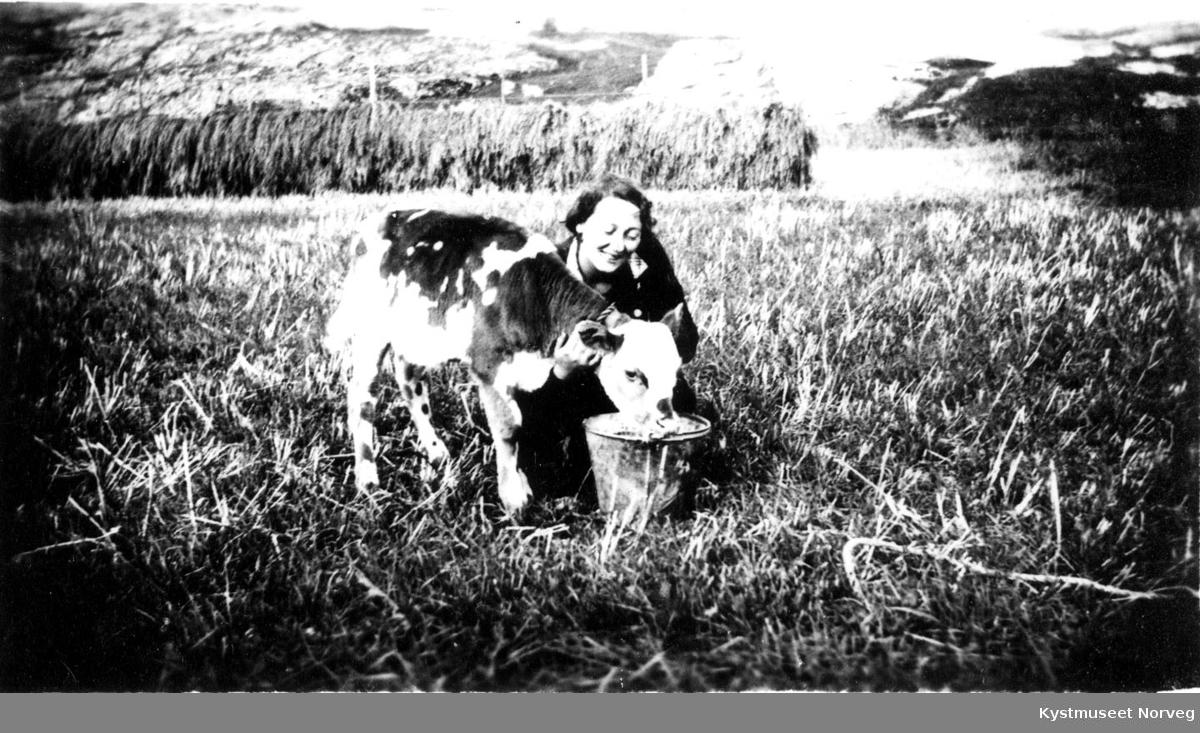 """""""Kalven får melk""""."""