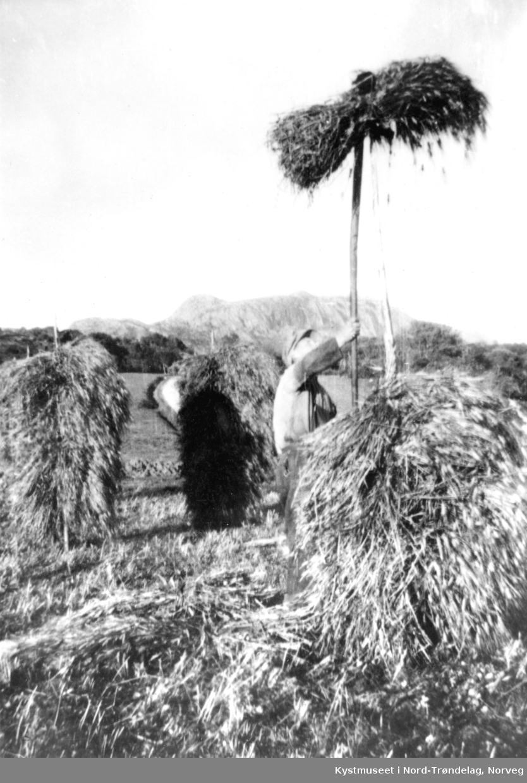 Stauring av korn på  småbruket Øyahalsenget, muligens Trygve Øyahals?