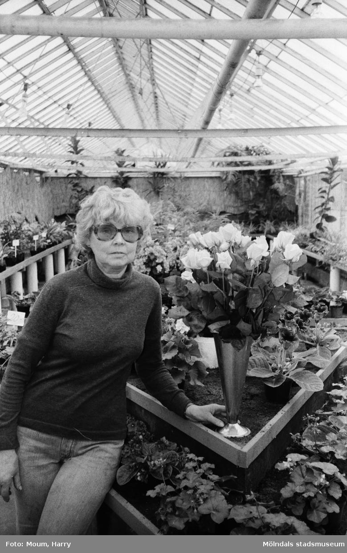 """""""Maj-Britt Karlström beundrar de fina Sonja-rosorna, som nu blommar."""" Blomsterodling i Kållered, år 1983.  För mer information om bilden se under tilläggsinformation."""