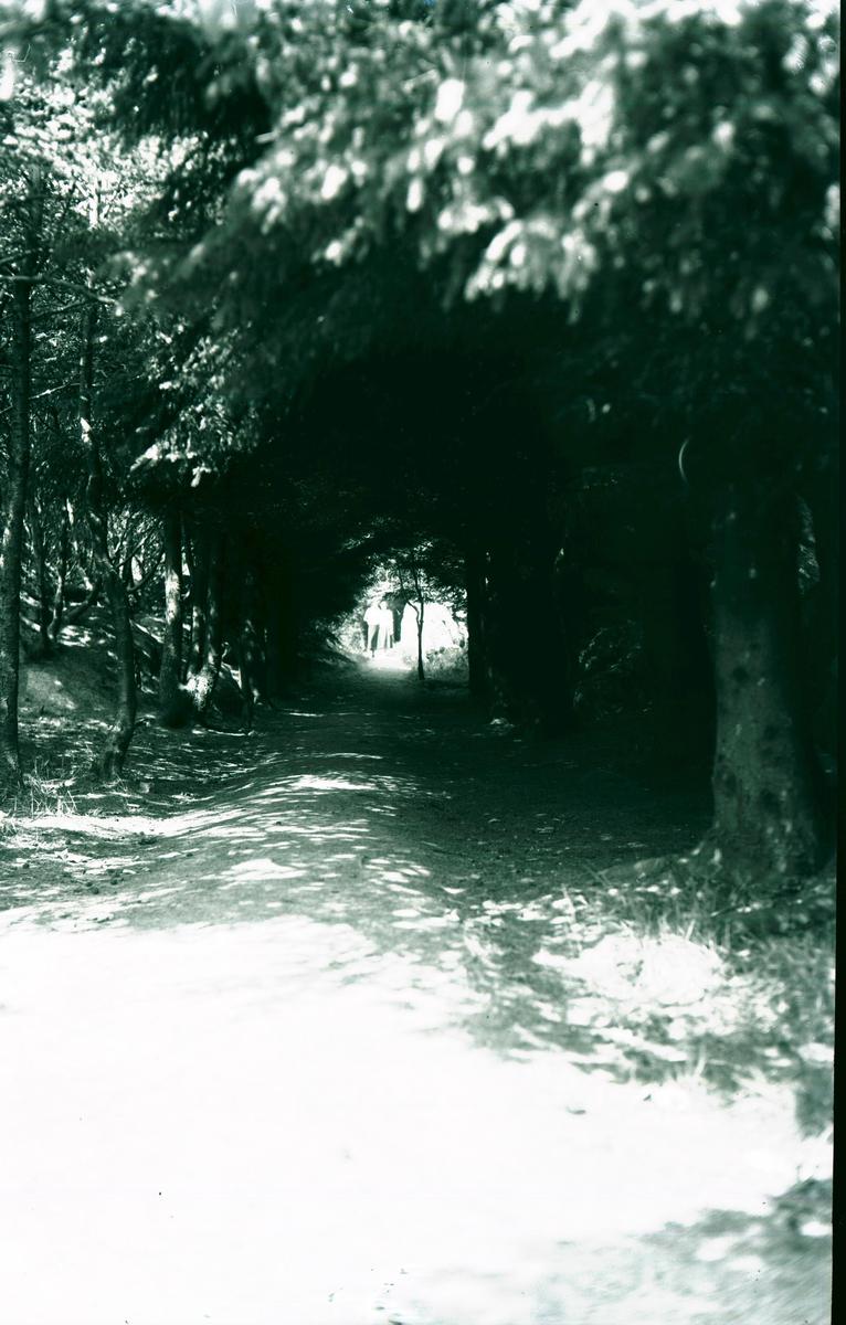 Skogsvei - Allé